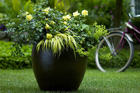 yellow roses and grass in black container with bike in background