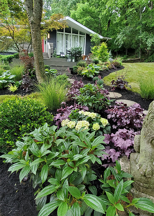 david viburnum in front with purple huechera, grasses and boxwoods in front of house and around entryway
