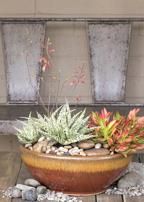 succulents in container