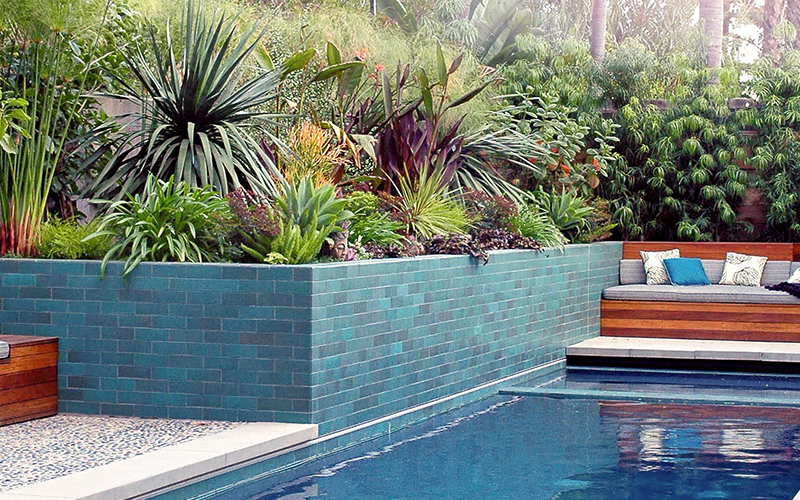 blue pool with blue tiled retaining wall with tropical landscaping