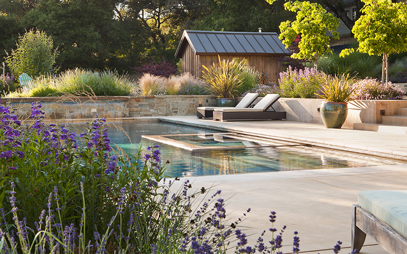 pool landscaping with purple penstemon, lavender, and grasses