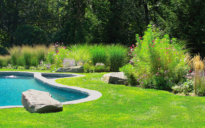 green lawn around pool with grasses and cosmos flowers in landscape