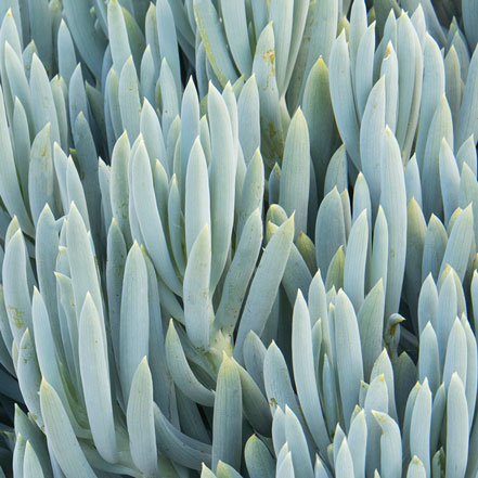 Blue-Chalksticks
