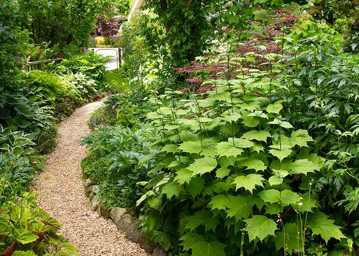 Garden-path_1079M_7x5