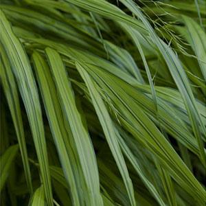 forestgrass_300