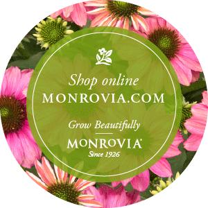 Monrovia_ShopOnline300x300