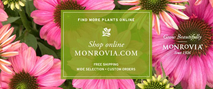 Monrovia_ShopOnline720x300