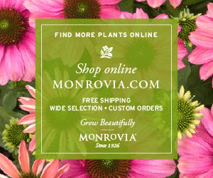 Monrovia_ShopOnline_300x250