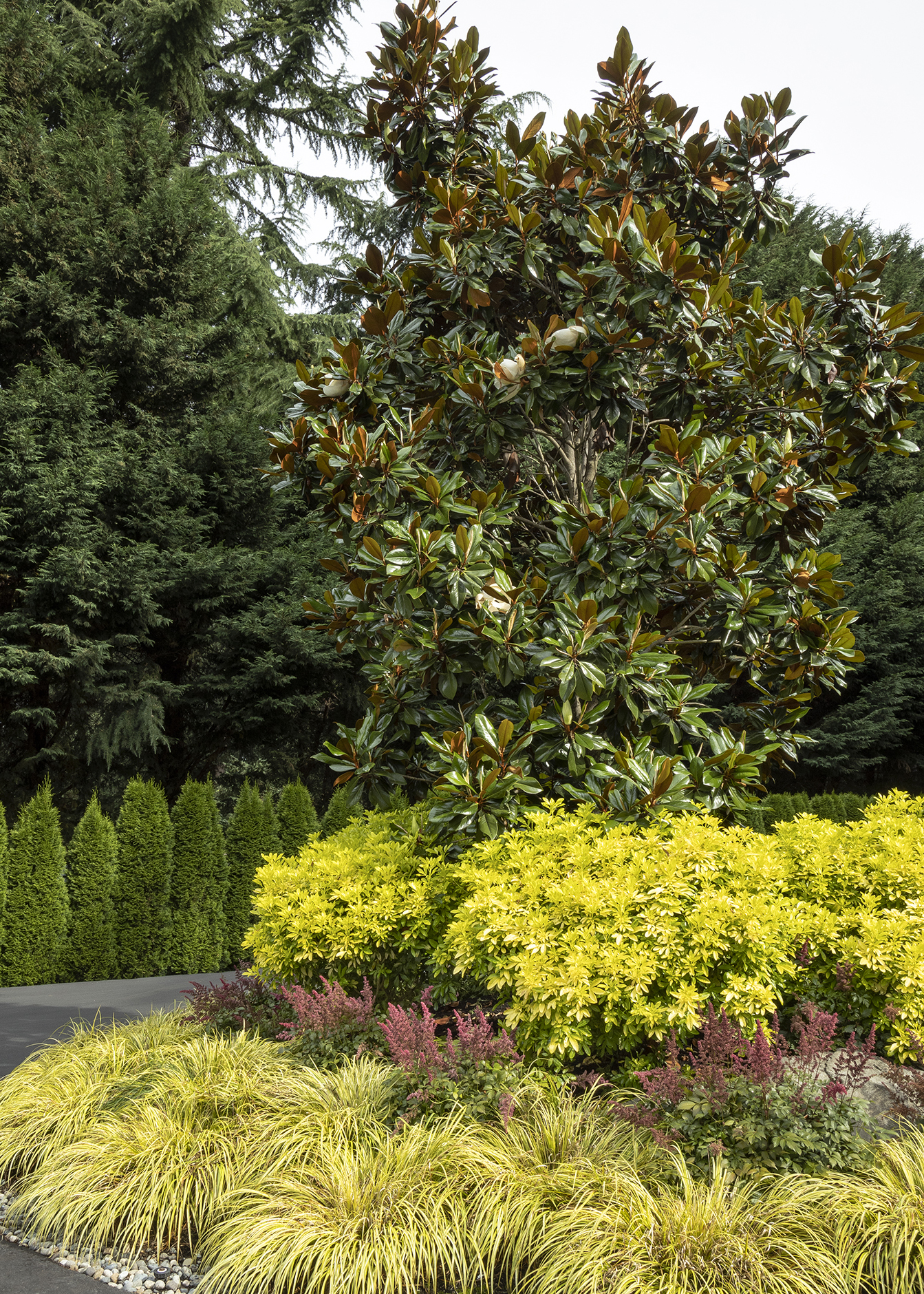 magnolia tree with shrubs and grass