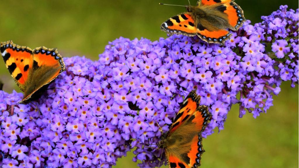 Grow A Year Round Wildlife Habitat Garden Zone 6 8 Be Inspired