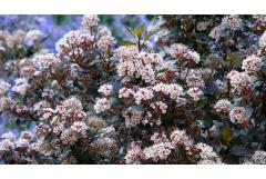 Dwarf Shrubs for Small Spaces