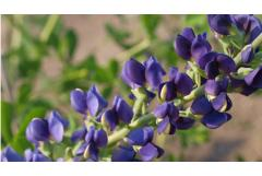10 Early-Blooming, Cold-Hardy, Pollinator Magnets