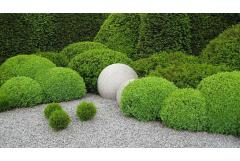 10 Things Topiary Lovers Should Know