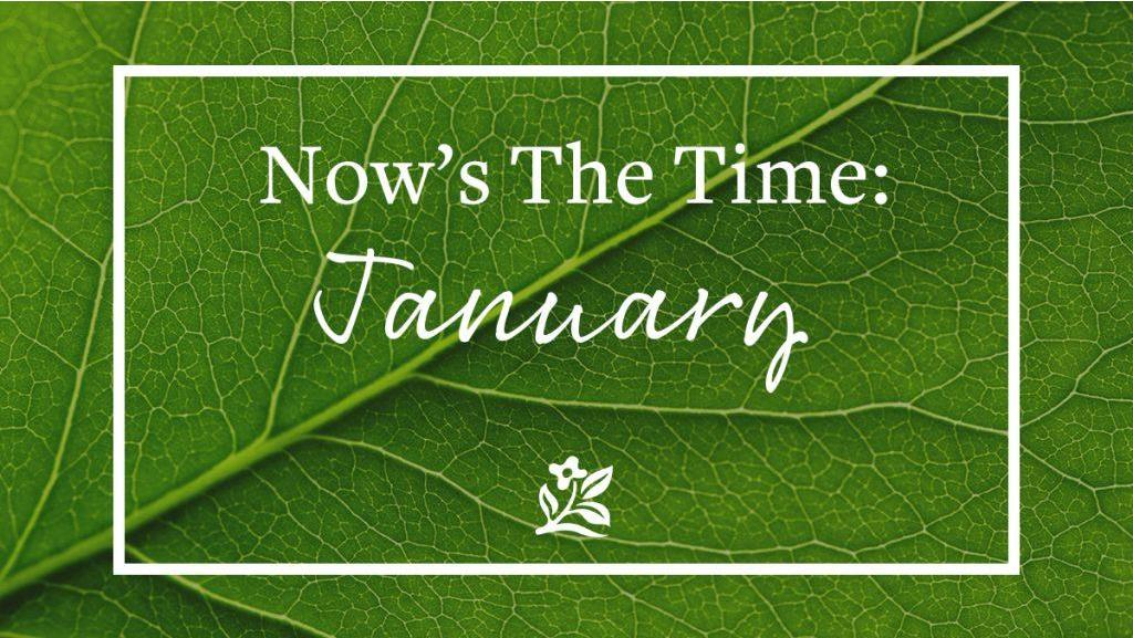Now's the Time: January