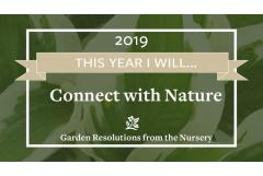 New Years' Resolutions from the Nursery