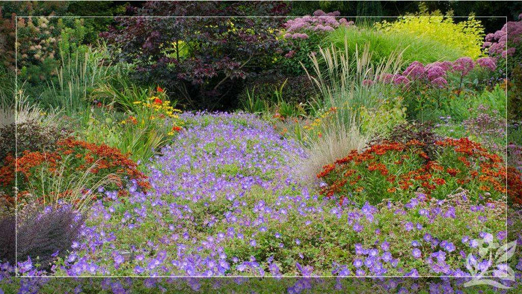 Long-Blooming Perennials for a More Beautiful Landscape