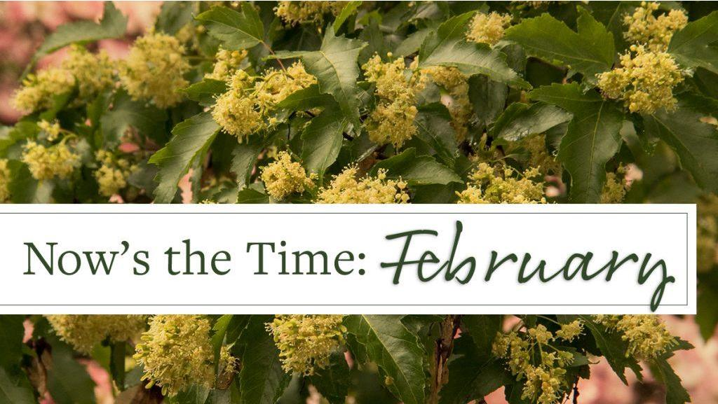 Now's the Time: February