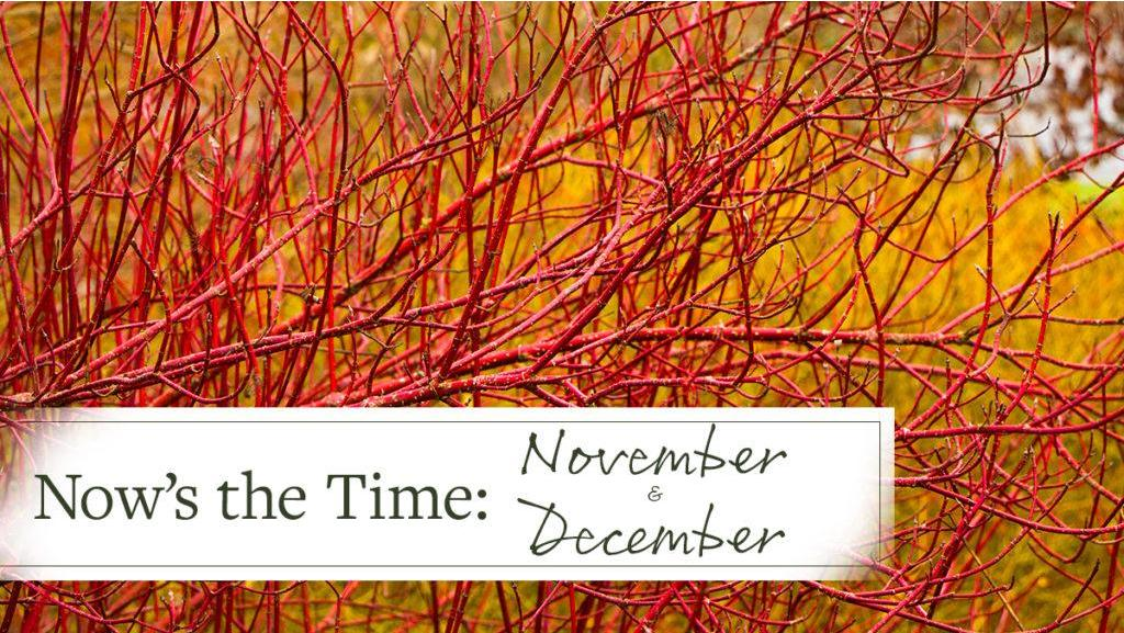 Now's the Time: November/December
