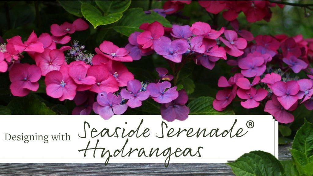 Design School: 3 Ways with Seaside Serenade Hydrangeas