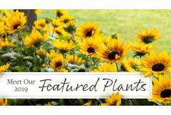 Meet Our 2019 Featured Plants