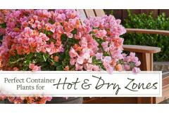 Perfect Container Plants for Hot and Dry Zones