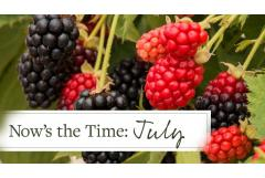 Now's the Time: July