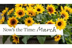 Now's the Time: March