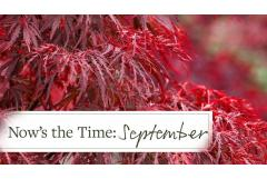 Now's the Time: September