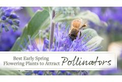Best Early Spring Flowering Plants to Attract Pollinators