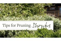 Top Tips for Pruning Shrubs