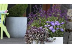 variety of purple flowers in white, full-sun container with green chair in background