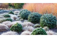 Anatomy Lesson: Planning for Late Fall's Frost