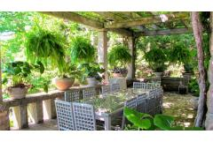 Dress Up the Porch with Ferns