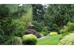 Top Conifers for Year Round Beauty (Zone: 7 - 10)