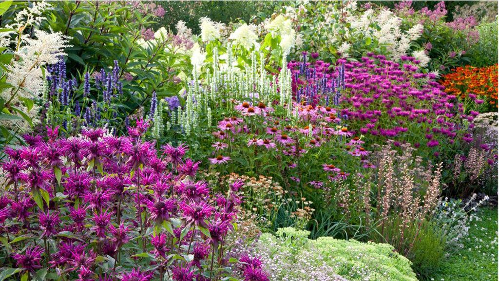 Ring the Dinner Bell: Grow a Pollinator Border