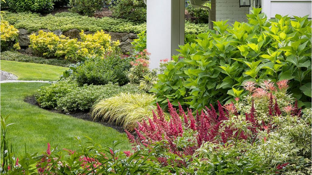 astillbe, shrubs and low grasses in a layered border in front of a house
