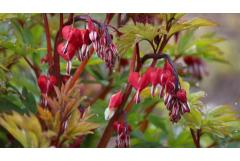 Romantic Plants for Valentine's Day Gifts