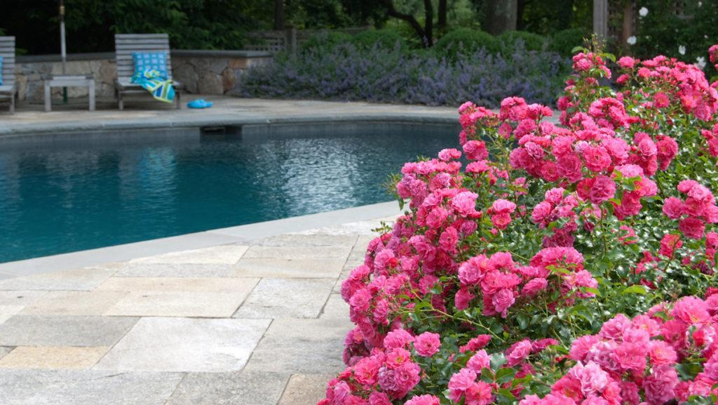 5 Ways to Design with Flower Carpet Roses