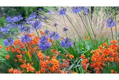 Get Non-Stop Summer Color (Zone 8 – 11)