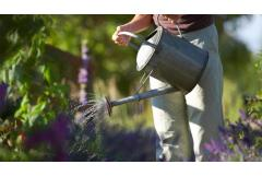 6 Easy Ways to Save Water in the Garden