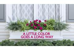 Creating a Color Pop Window Box