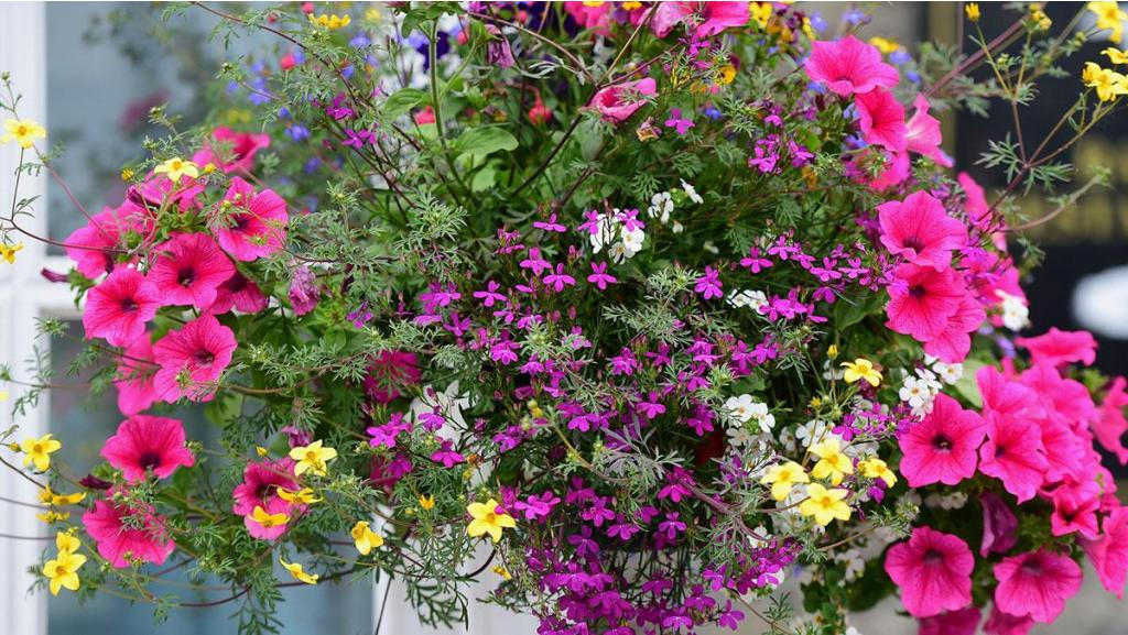 Hang on! It's our new hanging baskets.