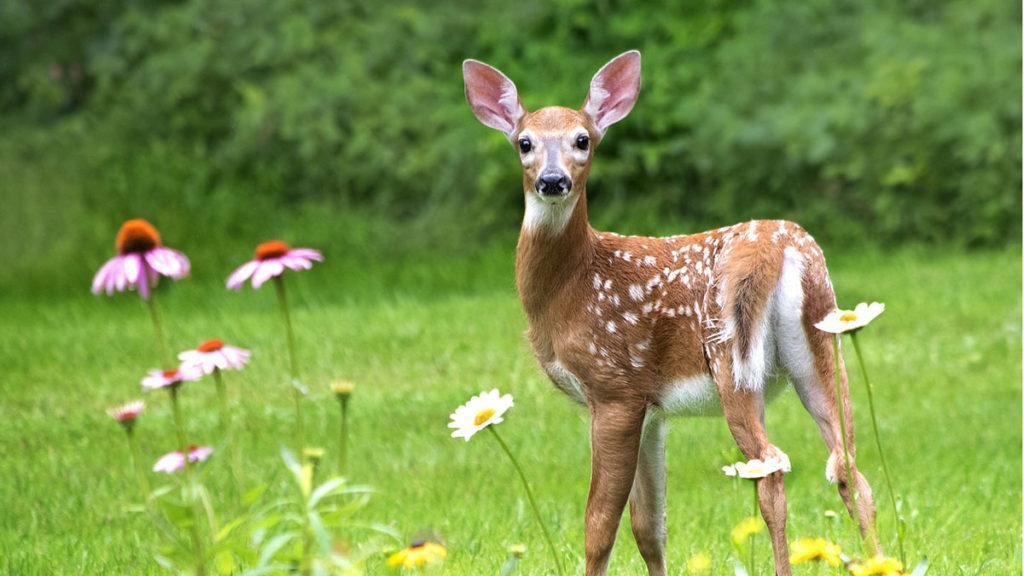 10 Plants Deer DON'T Love