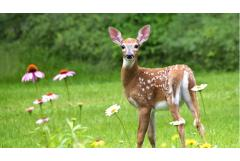 10 Plants Deer DON'T Love