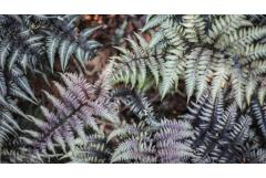 5 Ways to Design with Ferns