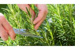 8 Things You Didn't Know You Could Do With Rosemary