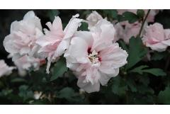 Best Shrubs to Attract Pollinators (South)