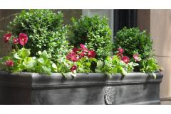 Better Ways to Use Boxwood