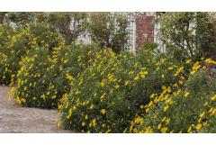 5 Great Early Blooming Shrubs (Southwest)