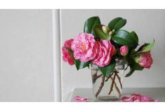Grow Camellias for Making Floral Arrangements